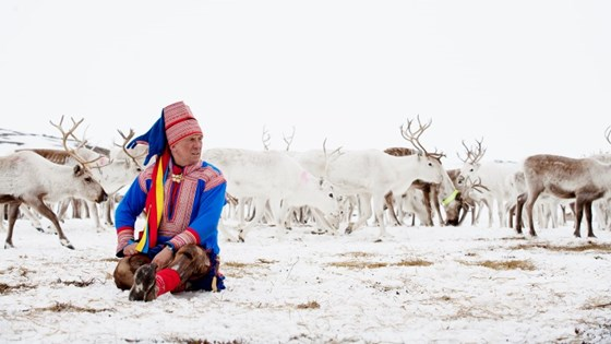 Reindeer husbandry is a unique indigenous peoples' industry, both nationally and internationally.
