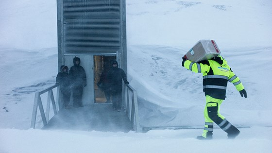 Five gene banks and research centers on four continents deposited seeds for this year's fifth and final opening of the Svalbard Global Seed Vault. A total of 10,060 new seed samples, from gene banks in Asia, Africa, South America and Europe, were placed in storage.