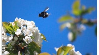 A strategy for viable populations of wild bees and other pollinating insects Credit.