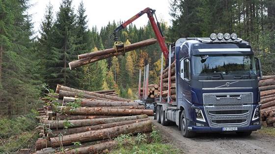 Tømmerbil.