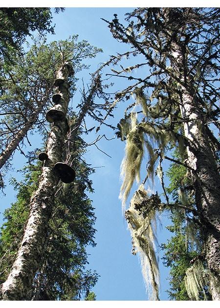 a102080e Figur 2.13 Skogen er levested for mer enn halvparten av alle kjente arter i  Norge.