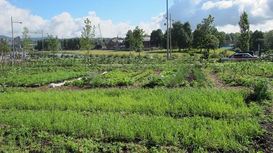 Urbant landbruk gjør byer grønnere