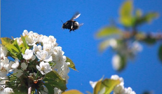 A strategy for viable populations of wild bees and other pollinating insects