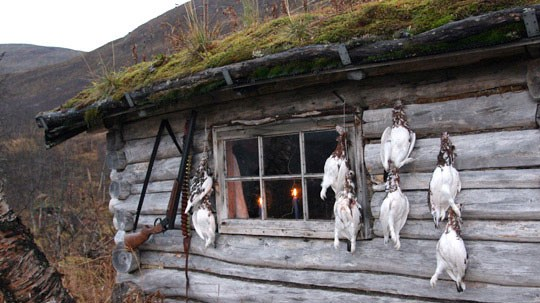 Ryper på hytteveggen.
