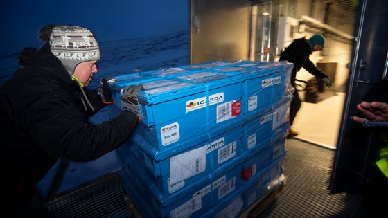 A new shipment of seeds from ICARDA has arrived and is taken into the Seed Vault for long term conservation.