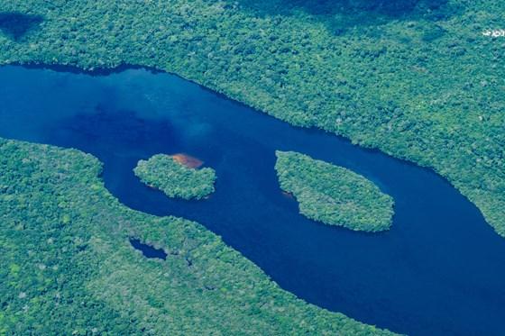 Amazonas regnskog fra lufta