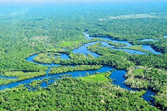 no aktuelt Gjennombrudd for regnskogbevaring id